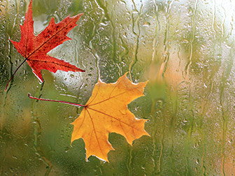 Window view of a rainy day and there are leaves stuck to the window