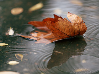 a leaf floating in a water puddle