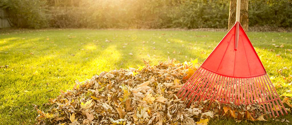 a rake with leaves in yard on a sunny day