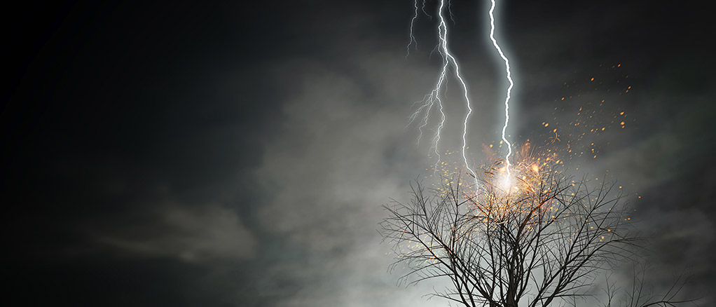 lightning striking a tree causing a power surge