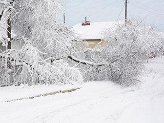 snowy tree fell on power lines