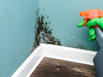 protect your home from mold